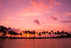 Coconut Palms, Cocos nucifera, Anaehoomalu or `Anaeho`omalu Beach, Waikoloa, Big Island, Hawaii, Pacific Ocean