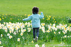 ©Licensed to London News Pictures 17/03/2020<br /> Greenwich, UK. Not a care in the world for this young girl as she enjoys playing amongst the colourful spring Daffodils in Greenwich Park, Greenwich, London. (permission given from parent)  Photo credit: Grant Falvey/LNP