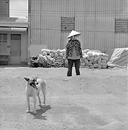 A vietnamese woman worker and a dog stand in a rice farming cooperative.  Can Tho region, Mekong delta, Vietnam.2005
