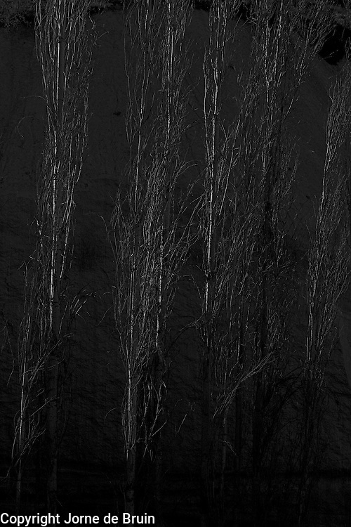Some birch trees are lit up in a dark canyon in cappadocia, Turkey