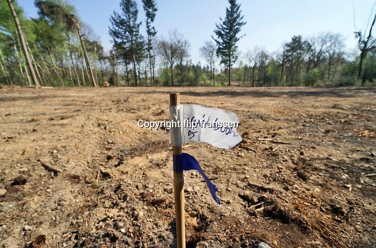 Nederland, Groesbeek, 18-04-2019 Afgelopen weken zijn er in de bossen rond Groesbeek veel bomen gekapt . Met harvesters, machines die de bomen in een keer kunnen zagen, onttakken en in stukken verdelen, worden open plekken in het bos gemaakt. De grond wordt omgewoeld en stronken uitgefreesd. Staatsbosbeheer en natuurmonumenten noemen dit oogsten van hout noodzakelijk om de biodiversiteit in de bossen te herstellen en ruimte te geven voor andere soorten flora en fauna, planten en dieren. Er is veel kritiek op het grootschalig kappen van bomen in de bossen. Foto: Flip Franssen