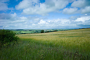 Barley cereal crop and landscape, Oxfordshire, The Cotswolds, UK