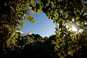 Nature and flora from El Pilar de la Mola, Formentera