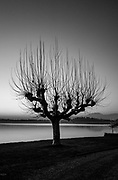 Groppello. Lombardia. ITALY. Skeleton, Silhouette of a tree.  structure, without leaves. Lake/Lago Varese. after sunset.  Italy<br />  <br /> Friday  30/12/2016<br /> <br /> © Peter SPURRIER,<br /> <br /> <br /> LEICA CAMERA AG - LEICA Q (Typ 116) - 1/400 - f1.7