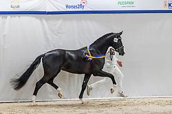 391, Nirvano<br /> KWPN Hengstenkeuring 2021<br /> © Hippo Foto - Dirk Caremans<br />  05/02/2021