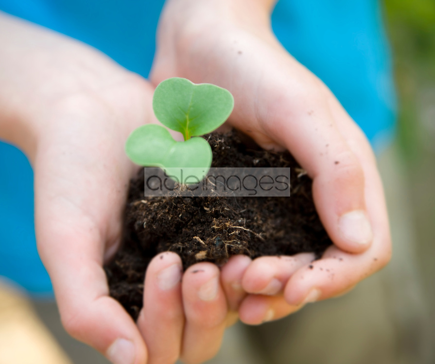 Close up of young boy hands holding seedling