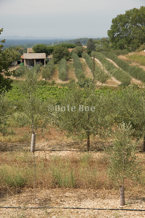 farming land with newly plant trees France Provence