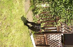 Jake Beaware of the Dog<br /><br />Image Copyright Paul David Drabble<br /><br />29 June 2003<br /><br />Copyright  Paul David Drabble<br /> [#Beginning of Shooting Data Section]<br />Nikon D1 <br /> 2003/06/29 13:11:53.1<br /> JPEG (8-bit) Fine<br /> Image Size:  2000 x 1312<br /> Color<br /> Lens: 24mm f/2.8<br /> Focal Length: 24mm<br /> Exposure Mode: Programmed Auto<br /> Metering Mode: Spot<br /> 1/250 sec - f/7.6<br /> Exposure Comp.: 0 EV<br /> Sensitivity: ISO 200<br /> White Balance: Auto<br /> AF Mode: AF-C<br /> Tone Comp: Normal<br /> Flash Sync Mode: Front Curtain<br /> Auto Flash Mode: External<br /> Color Mode: <br /> Hue Adjustment: <br /> Sharpening: Normal<br /> Noise Reduction: <br /> Image Comment: <br /> [#End of Shooting Data Section]