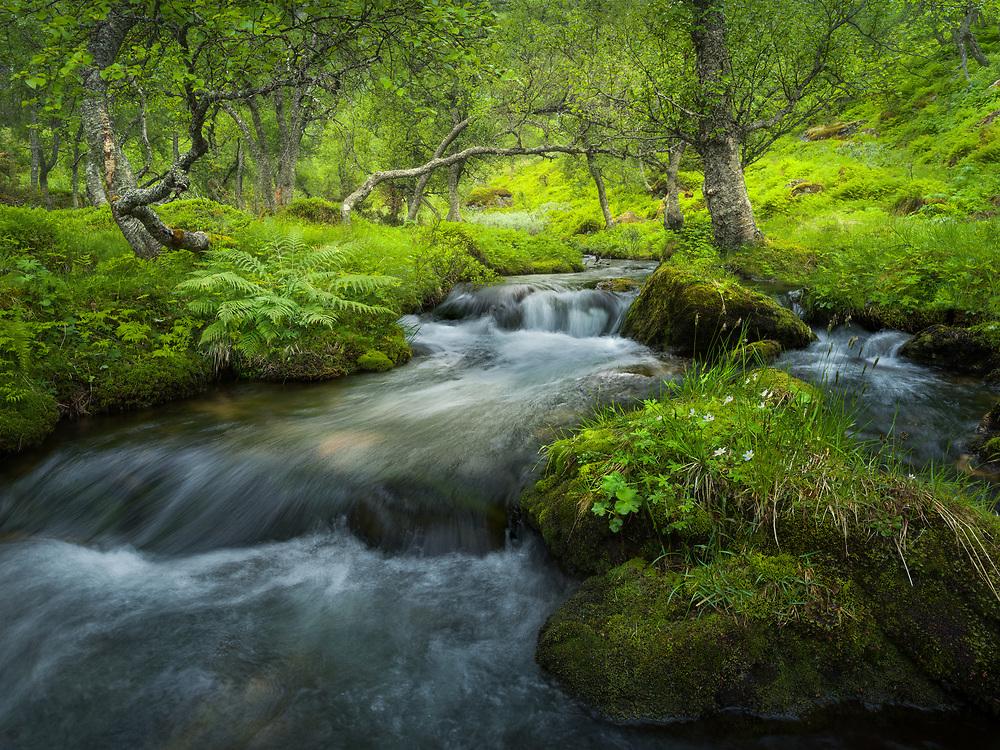 Romsdalen, Norway. June 2021.
