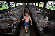 "A hired help walk through by pens where pregnant sows are kept at the Grand Canal Pig Farm in Jiaxing, Zhejiang Province, China on 04 August, 2011.  Pork is by far the most popular meat eaten in China, with its value deeply ingrained in the mind of the Chinese people. The importance of pork in the Chinese diet and the role of prices in affecting social stability are demonstrated by the establishment in 2007 by the central government of a ""strategic pork reserve"", the only one of its kind in the world."