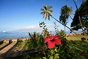 Red Hibicus, Lahaina, Maui, Hawaii