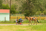 Handicapped lady leads mule on scooter at Montana Mule Days, Montana