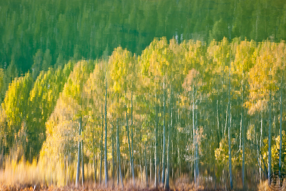 """""""Aspen Reflection on Water 2"""" - This is a photograph of an aspen reflection on the surface of Marlette Lake."""