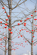 View of lots of red Chinese lanterns hanging on the branches of a bare tree, Tunxi district, Huangshan City, Anhui Province, China