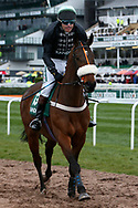 Mr Mercurial and jockey Will ramsey head for the start for the 4.05PM The Randox Health Foxhunters' Steeple Chase (Class 2) 2m 5f during the Grand National Festival Week at Aintree, Liverpool, United Kingdom on 4 April 2019.