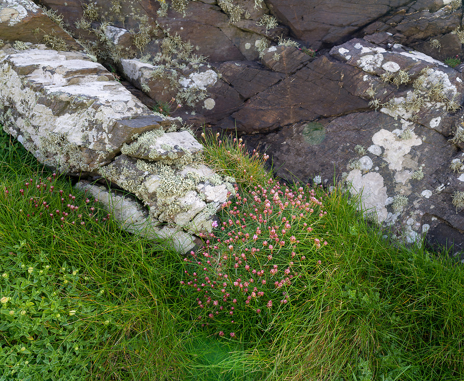 Early spring flowers along the Cornwall coast.