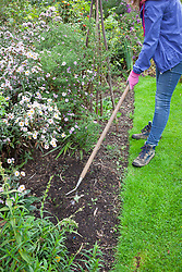 Hoeing weeds in a border using a swoe hoe