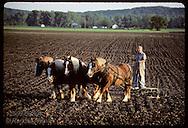 Vernon Gloe hoeing field as he drives team of Belgian horses across Missouri Rhineland farm. Missouri