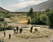Working on the threshing floor, with donkeys. The traditional life of the Wakhi people, in the Wakhan corridor, amongst the Pamir mountains. This is Afghanistan, the Wakhan corridor – those mountains on the right, this is Tajikistan, and to the left behind the mountains is Pakistan. When We arrived in late August, all the villages were buzzing with agricultural activities, here men are threshing with cows, a practice that has been going on for 1000 of years. Not a drop of oil is used for producing food.