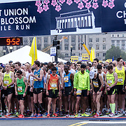 The start line of the elite men's division a few seconds before the start of the 2012 Cherry Blossom 10-Miler. At right, in the number 9 bib, is the eventual winner, Allan Kiprono from Kenya, who set a new course record of 45:15. To his right, in number 11, is Lani Kiplagat, also from Kenya, who came second in 46:28. This year was the 40th running of the race that is run every spring in Washington DC to coincide with the National Cherry Blossom Festival. The course starts near the Washington Monument, heads over Memorial Bridge and back, goes up under the Kennedy Center, around the Tidal Basin and past the Jefferson Memorial, and then does a loop around Hains Point back to the finish near the Washington Monument.