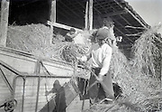 farmers at work bringing in the wheat harvest 1950s