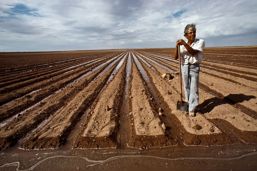 A farmer stands next to his newly irrigated field in Baja California.