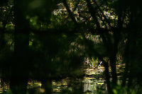 Pond in the spring, through the trees.