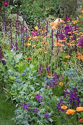 Geum 'Totally Tangerine' with Calendula 'Indian Prince', Allium 'Purple Sensation', Melica altissima 'Alba', Cerinthe major 'Purpurascens', Salvia nemorosa 'Caradonna' and Linaria maroccana.