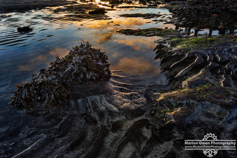 Sunrise colored clouds reflect in tide pool, Kodiak, Alaska