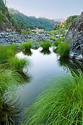 Grasses in the Eel River,Mendocino County, California