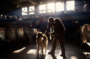 Grooming a pet dog before another round of Crufts Show in Earls Court, London. With strong backlighting sunshine, the animal's owner brushes its coat to make it presentable before the judges in a short while. Nearby, other owners sit with their own dogs in stalls provided by the Kennel Club organisers. Crufts is one of the largest dog events in the world. No longer purely a dog show, Crufts celebrates every aspect of the role that dogs play in our lives.