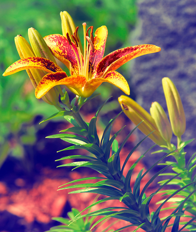 A Yellow Flower Blooming In The Garden