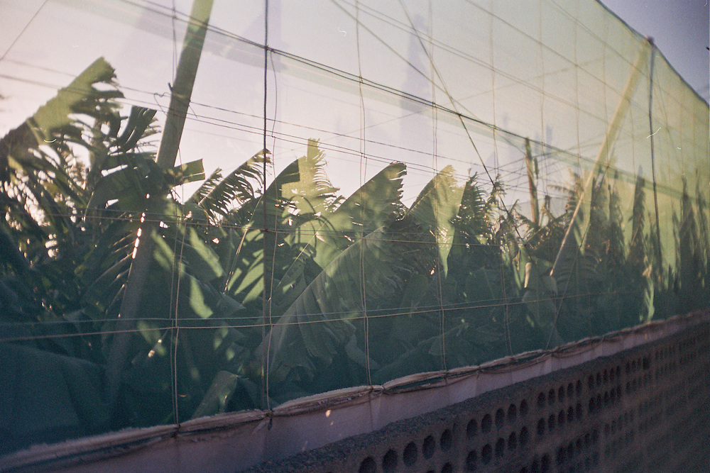 2006, Tierra y Aqua La Palma, Analoge Filmaufnahmen mit Plastikkamera; Toy camera shot on film while wandering through the island of La Palma,