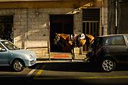 Reggio Calabria. Italy 2012