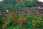 AE2KYD Rich plant diversity in a roadside verge on small country road Cornwall England