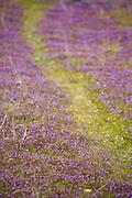 Aquidauana_MS, Brasil...Flores em uma paisagem da fazenda Rio Negro no Pantanal...Flowes in landscape in the Rio Negro farm in Pantanal...Foto: JOAO MARCOS ROSA / NITRO
