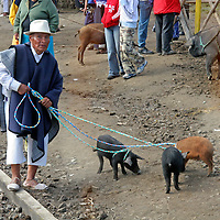 South America, Ecuador, Otavalo. A local farmer and his purchase of three little pigs at the Otavalo animal market.