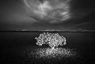 Vietnam Images-tree-Fine art-Kien Giang hoàng thế nhiệm