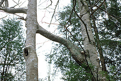 Trees Joined At Branch