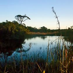 """""""Brejo herbáceo (Ambiente) fotografado em Guarapari, Espírito Santo -  Sudeste do Brasil. Bioma Mata Atlântica. Registro feito em 2008.<br /> <br /> <br /> <br /> ENGLISH: Herbaceous-marsh photographed in Guarapari, Espírito Santo - Southeast of Brazil. Atlantic Forest Biome. Picture made in 2008."""""""