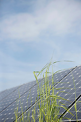 Close up blade of grass in front of solar panel