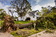 "12 AUGUST 2020 - SLATER, IOWA: A large tree in front of a home in central Iowa. According to Iowa Governor Kim Reynolds, the storm damaged 10 million acres of corn and soybeans in Iowa, about 1 one-third of Iowa's 32 million acres of agricultural land. Justin Glisan, Iowa's state meteorologist, said the storm Monday, Aug. 10, lasted 14 hours and traveled 770 miles through the Midwest before losing strength in Ohio. The storm was a seldom seen ""derecho"" that packed straight line winds of nearly 100MPH. The storm pummelled Midwestern states from Nebraska to Ohio.    PHOTO BY JACK KURTZ"