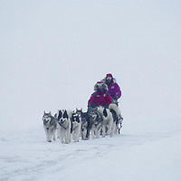 Team mushes through storm on Great Slave Lake, NWT, Canada.