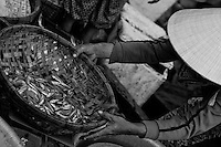 Woman weighing a basket of fish at the Hoi An fish market.