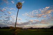 Aquidauana_MS,Brasil...Buriti (Mauritia Flexuosa) em uma paisagem da fazenda Rio Negro no Pantanal...The Buriti (Mauritia Flexuosa) in the landscape in the Rio Negro farm in Pantanal...Foto: JOAO MARCOS ROSA / NITRO