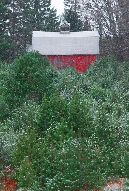 Snow falls on a small red barn on a Christmas tree farm near Eagle River, Wis.