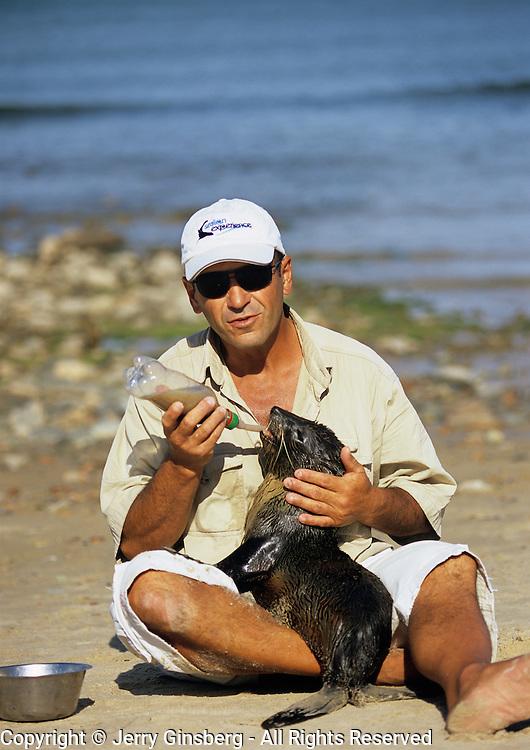 South America, Uruguay; Piriapolis; Feeding a wayward seal at the animal rescue facility.