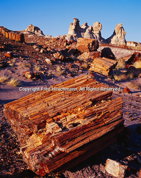 Petrified logs and Chinle Formation badlands, Blue Mesa, Petrified Forest National Park, Arizona.