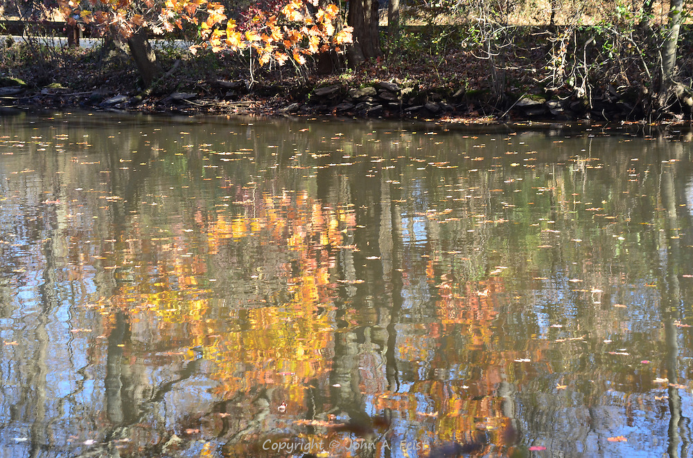 Looking at some of the fall colors along the tow path of the D and R Canal in Hillsborough, NJ