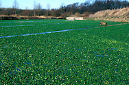 Watercress bed, Hampshire